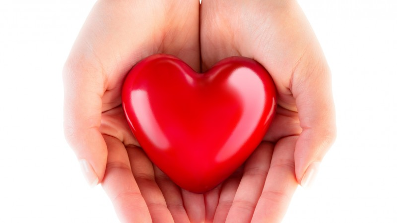 heart in hands – donation of love